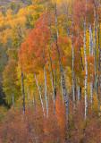 Legend of the Fall: Colorado 2016