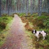 On her walk
