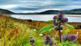 Burdock, Loch Fleet