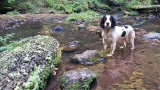 Eilein at Fairy Glen