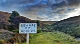 Beware of Adders