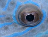 Filefish Eye