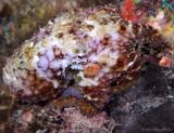 TS Octopus