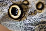 Closeup Eye Pattern