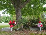 My husband's grandparents graves.