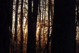 Evening walk through our woods