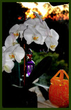 Orchid sunrise.jpg