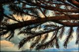 Thread painting with eyelash fiber detail.jpg