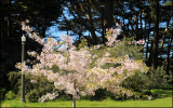 Good Friday Blossoms.jpg
