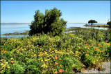 Wild flowers by the Bay in San mateo.jpg