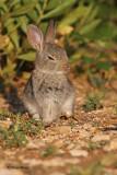 Zajec/Rabbit