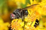 Zuzelke/Insects