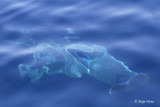 Dolphin under the water _MG_1096.jpg