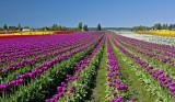 Washington State Landscapes