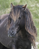 Sable Island National Park