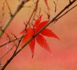 Autumn in Campo del Moro (Madrid)