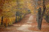 A Half an Hour Walk By La Granja Gardens (Segovia)