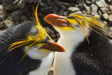 Birds of  (Sub)Antarctic