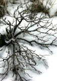 Arrayed on Snow