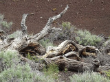 Wilderness Trail Sculpture