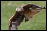 In flight close up