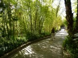 Bamboo Path With Nancy.jpg