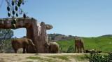 Elephants - 1.jpg