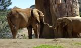 Elephants - 2.jpg
