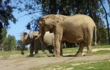 Elephants - 4.jpg