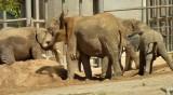 Elephants - 5.jpg
