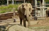 Elephants - 6.jpg