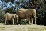 Elephants - 7.jpg