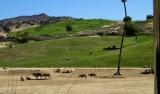 Gazelles - 6.jpg