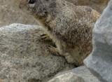 Squirrel - 1.jpg