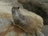 Squirrel - 2.jpg