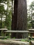 Redwood Forest - 2.jpg
