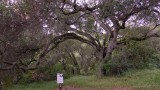 EF Tree - 1.jpg