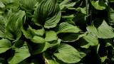 Sumie's Plants.jpg