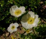 Flowers - 5
