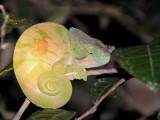 Madagascar - Other Wildlife