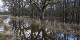 Winter floods at Ross Park, west Loch Lomond