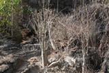 Spiny vegetation at Little Tsingy