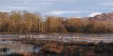 Ben Lomond and Wards Pond