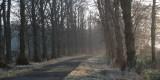 Misty Wards Avenue
