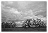 Hedge row I-35 N ,Oklahoma