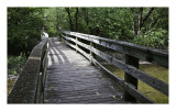 Foot bridge  over Chisholm Creek