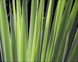 Cactus Spike Detail
