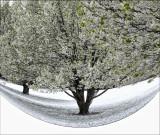 Fish eye effect  Spring Snow