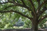 Encompassing Tree