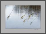 Windblown Willow